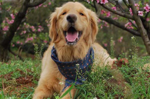 好听可爱的狗狗名字_好听的宠物狗名字大全_好听的小狗名字