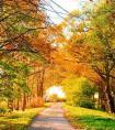 描写秋天稻谷的好段